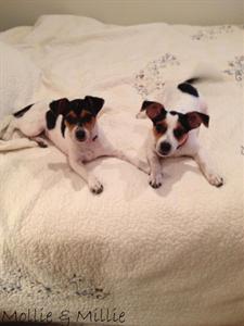 Mollie & Millie